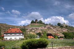 Radebeul (binax25) Tags: radebeul weinberg hoflössnitz bismarckturm spitzhaus frühling spring vine wein syxony germany plants ausflug spaziergang nature