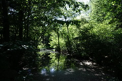 DSC08620 (John KwokNewYorkNY) Tags: bealpha sonyalpha carlzeisslenses zeisscameralens centralpark