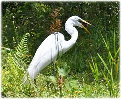 Sawgrass Lake Park - St Petersburg, Florida (lagergrenjan) Tags: sawgrass lake park st petersburg florida bird turtle
