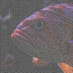 Panda Fish thumbnail