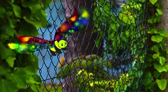 Good Panda's free firefly #goodpandacontest (7 Blue Nights) Tags: goodpandacontest fence firefly dragonfly fairy fantasy butterfly friday butterflies smileonsaturday