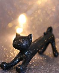 2019 Macro Mondays: Superstition (dominotic) Tags: 2019 macromondays superstition positiveblackcatsuperstitions negativeblackcatsuperstitions blackcat macro bokeh sydney australia