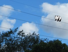 Bad Panda (jefalump) Tags: sky trees powerlines panda atsh ontheline good