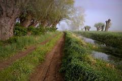 Strada campestre (Zz manipulation) Tags: ambrosioni art zzmanipulation landscape sentiero campagna alberi natura
