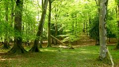 New Forest NP, Hampshire, UK (east med wanderer) Tags: england hampshire uk newforestnationalpark nationalpark woodland forest trees wood spring green oak beech