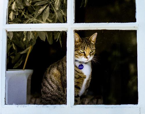 cariad window 1  j sml