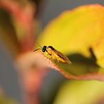 Insecte thumbnail
