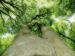 THE CANOPY AT TULLYARD FORT (Monkiiiey Henry Clark) Tags: the canopy at tullyard fort trees green