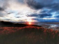 Red Grass at the Great Salt Lake (Robert Cowlishaw (Mertonian)) Tags: mertonian robertcowlishaw canon powershot sx70hs canonpowershotsx70hs ineffable awe wonder beautiful beauty sunset dusk red shoreline greatsaltlake clouds sky spring2019 deepseeksdeep parasophia