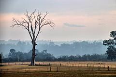 Cobbitty Road. (Ian Ramsay Photographics) Tags: cobbitty newsouthwales australia rural landscape hazard reduction fires macarthur region layers smoke negative enhance