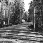 Forest road thumbnail