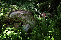 Massey Fergusson MF 35x et Panhard PL17 (à l'oeil de verre photographie) Tags: épave rouille volant arbre forêt feuilles feuille perdu végétation wreck lost mousse àloeildeverrephotographie