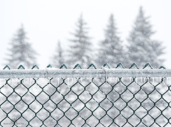 remember this? just a month ago. (marianna armata) Tags: winter fence chainlinked snow ice trees montreal mariannaarmat marianna armata