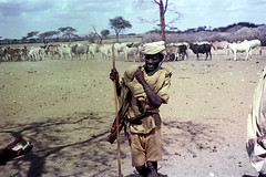 78-080 (ndpa / s. lundeen, archivist) Tags: nick dewolf color photograph photographbynickdewolf 1976 1970s film 35mm 77 reel77 africa northernafrica northeastafrica african ethiopia ethiopian people localpeople landscape terrain tree hills mountains man localman herder herd livestock cattle cows stick weapon rifle headcovering turban youngman ammunition ammunitionbelt 78 reel78