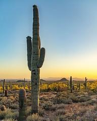 Desert (Daniel000000) Tags: new old cactus az arizona art sunset light plants landscape nature nikon d850 photography dslr mountains mountain yellow green spring explore
