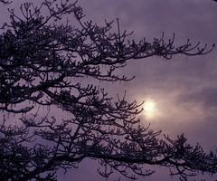 icylight (michaelmaguire4) Tags: hazy sun icesicles