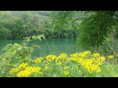 ViaRhenana 16 (Beat09) Tags: natur nature schweiz switzerland suisse rhein rhine rheinufer river fluss wasser water