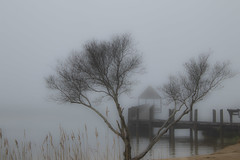 Ocean City MD (bhermann.hamburg) Tags: fog nebel ngc grey grau wasser water tree baum steg pier