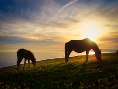 Eat Your Greens (Timothy Gilbert) Tags: pony coast lovecornwall cornwall m43 microfourthirds panasonic microfournerds ramehead lumix gx8 whitsandbay panasonic20mmf17ii
