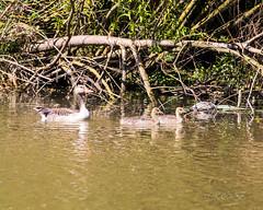 80D-229416.jpg (CitizenOfSeoul) Tags: naturfotografie naturphotography wiesen wasservögel ludwigsburg zugwiesen outdoorphotography outdoor naturschutzgebiet vögel natur wildlife