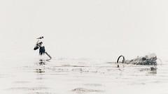 Week 20 Shoot High Key BnW (Carol Dunham) Tags: projectsunday oystercatcher highkey blackandwhite