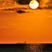 CARGO SUN