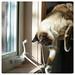 an indoor cat's entertainment