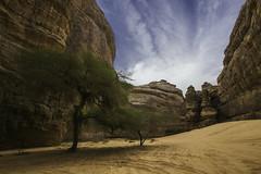 Desert green (timfeld1) Tags: desert saudi arabia blue sky rocks cliff valley ruins ancient landscape green trees