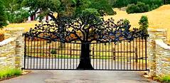 Unique black wrought iron tree-gate:  HFF! (peggyhr) Tags: peggyhr img9959a gate wall fence hff trees california usa infinitexposurel1 carolinasfarmfriends thegalaxy thegalaxystars