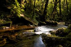 Au fond de la vallée (leon.vaillat) Tags: ruisseau eau cascade jura arbre vallée