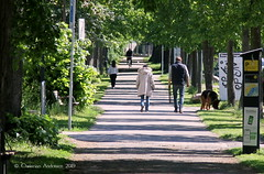 ... In the Green ... (ChristianofDenmark) Tags: copenhagen christianofdenmark denmark spring trees green dog sniffsniff