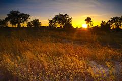Sunset - Fajarda - Coruche (Capturedbyhunter) Tags: fernando caçador marques fajarda coruche ribatejo santarém portugal pentax k1 smc m zoom 2435 f35 landscape paisagem pôr do sol sunset manual focus focagem foco pentaxart