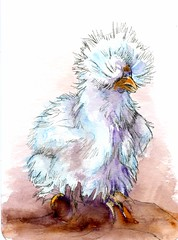 Silky Chicken-Postcards for the Lunch Bag (Life Imitates Doodles) Tags: postcardsforthelunchbag watercolor silkychicken bird