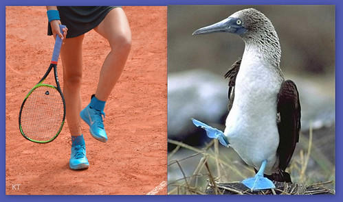 Victoria Azarenka - The mating dance of the blue-footed booby