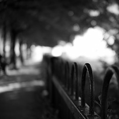 A Canopy of Trees (Explored) (lancekingphoto) Tags: trees sidewalk fence shallowdepthoffield hotnightinknoxville tennessee thesouth fujifilmxe2 meike35mmf17