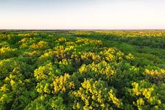 Saint Croix State Park, Minnesota (Tony Webster) Tags: june minnesota saintcroixstatepark stcroixstatepark firetower spring statepark sunset crosbytownship unitedstatesofamerica