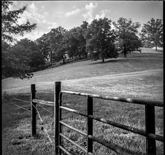 hillside, pastoral, cattle fence, trees, Biltmore Esate, Asheville, NC, Bencini Koroll, Iflord FP4+, HC-110 developer, 5.23.19 (steve aimone) Tags: hilldside landscape pastoral cattlefence lineoftrees biltmore biltmoreestate asheville northcarolina bencini bencinikoroll ilfordfp4 hc110developer 6x6 monochrome monochromatic blackandwhite mediumformat 120 120film film