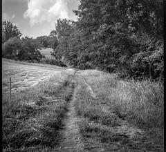 dirt road, pathway, pasture, trees, Biltmore Esate, Asheville, NC, Bencini Koroll, Iflord FP4+, HC-110 developer, 5.23.19-2 (steve aimone) Tags: road dirtroad pathway tiretracks grasses pasture treeline biltmore biltmoreestate asheville northcarolina bencini bencinikoroll ilfordfp4 hc110developer blackandwhite monochrome monochromatic mediumformat 120 120film film 6x6 landscape