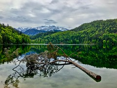Tree in lake Hechtsee under an overcast sky in Tyrol, Austria (UweBKK (α 77 on )) Tags: tree forest lake water reflection mountain snow alps hechtsee tyrol tirol austria europe europa iphone österreich