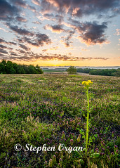 Sunrise in the country side (Stephen Organ Photography) Tags: knoxcounty landscape nature