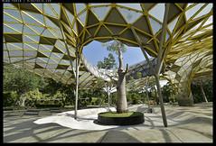_3502385 copy (mingthein) Tags: thein onn ming photohorologer mingtheincom availablelight lake gardens kuala lumpur kl malaysia nikon d3500 afp 1020 f4556 dx vr afp1020