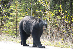 144:365-May 24-Bear With Me (karendunne337) Tags: