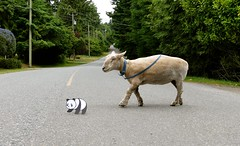 Good Panda... (aprilamb) Tags: goodpandacontest