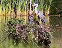 80D-229546.jpg (CitizenOfSeoul) Tags: naturfotografie naturphotography wiesen wasservögel ludwigsburg zugwiesen outdoorphotography outdoor naturschutzgebiet vögel natur wildlife