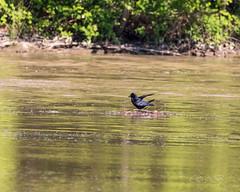 80D-229503.jpg (CitizenOfSeoul) Tags: naturfotografie naturphotography wiesen wasservögel ludwigsburg zugwiesen outdoorphotography outdoor naturschutzgebiet vögel natur wildlife