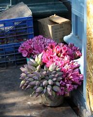 puducherry still life (kexi) Tags: puducherry pondicherry india asia flowers pink stilllife vertical canon february 2017 blue painterly