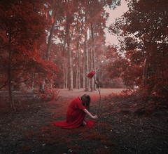 Wilted valentine (Deltalex.) Tags: alexbenetel girl woman fineartphotography portrait selfportrait valentine valentinesday love wilted deltalex rose red forest
