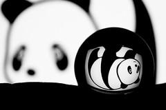 pandas world (Mau Silerio) Tags: panda goodpandacontest bw cristal crystal ball
