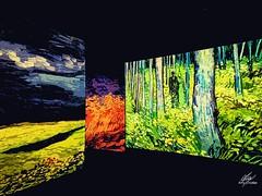 Van Gogh panels (Amy Charlize) Tags: amycharlize focosocial paint vangogh vincent beautiful beauty colores colors colours art photography museum