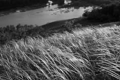 _DSC0771 (Boris Anipchenko) Tags: spring mountains grass sunset sokolmountains весна горы трава закат сокольигоры